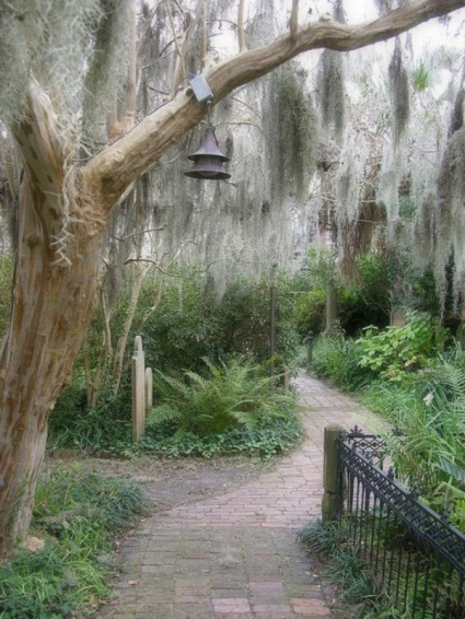 Spanish Moss in a garden softened